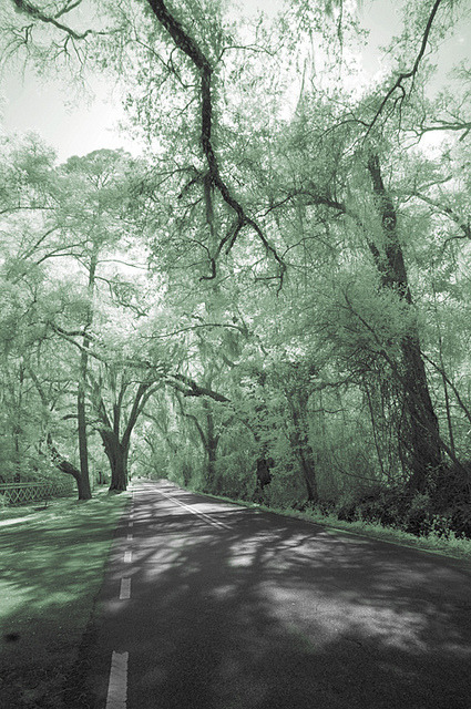Canopy Road 3, Tallahassee, Florida on Flickr.