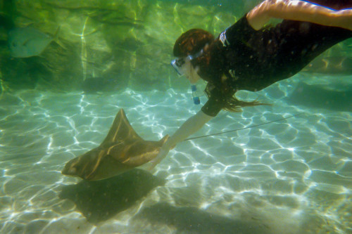 Also this is me hanging out with a stingray