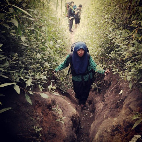 Faizana at Merbabu #mountain today #hiking at jalur Selo #yogyakarta wet #track #green #forest #tropis