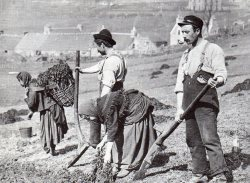 agrarianrhythm:  Crofters plant potatoes in fields on Skye, Scotland.