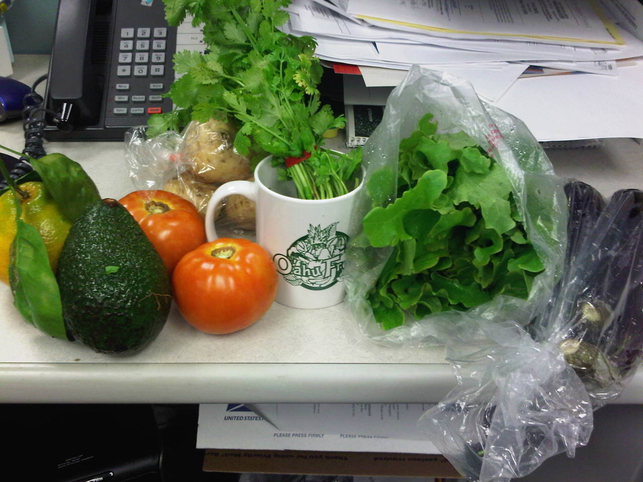 12.29- @oahufresh csa :)Looks like eggplant parm and avocado shakes this week! Hehee. Also: thanks @oahufresh for the spiffy mug :) Sara Katahira http://nubcak.es