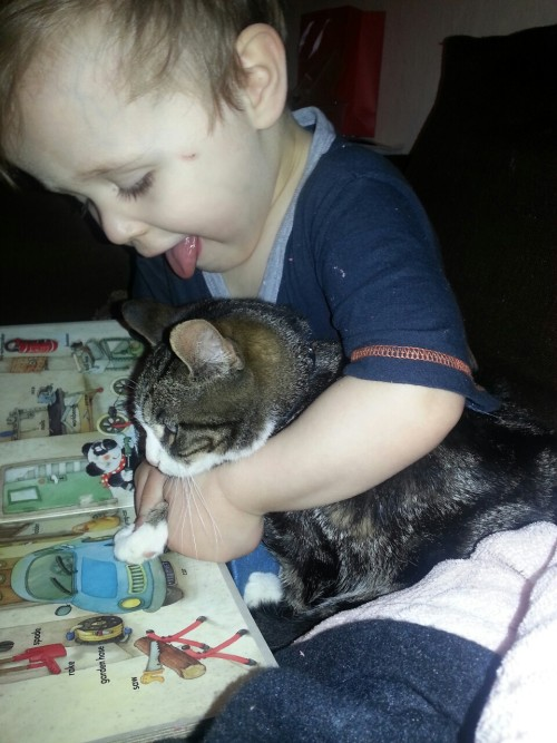 josielg:  My son trying to make the cat read…