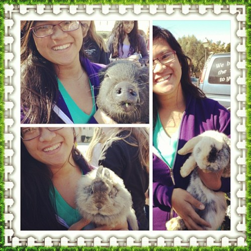 Petting #zoo at #scu!! #bunny #pig #bestdayever #scusnapshot 🐰🐰🐷🐷 (at Santa Clara University)