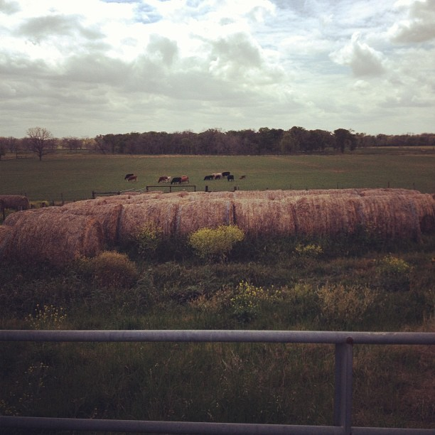 I had to pull over. #texas #landscape #america #hay #cows #open #sky  (at rockdale, texas)