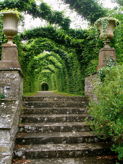visitheworld:  Birr Castle Gardens in Co. Offaly, Ireland (by lisa.dukart).   Gardens