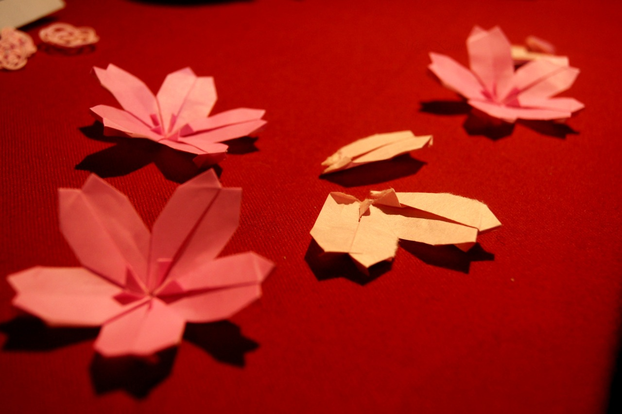 Today I noticed the sakura buds getting larger. It's almost spring!  Origami unit sakura (cherry blossom). Each petal is one sheet of paper (totaling 5 sheets for one sakura). These were displayed at my 折り紙展 — origami exhibit — at a small sembei shop (あとひきせんべい) in Kawagoe, Saitama, Japan.