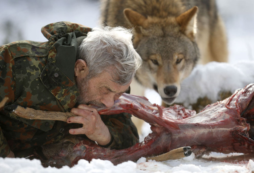 gaksdesigns:  The Wolf Man. Wolfspark Werner Freund is a wolf sanctuary spread over 25 acres in western Germany. It is home to 29 wolves — six distinct packs hailing from Europe, Siberia, Canada, the Arctic, and Mongolia. Researcher Werner Freund, 79, a former German paratrooper, established the sanctuary in 1972 and has raised more than 70 animals there over the last 40 years. He acquired the wolves as cubs from zoos or animal parks and has reared them mostly by hand. Werner has also taken to living closely with his wolves, behaving as an alpha male to earn their acceptance and respect. via