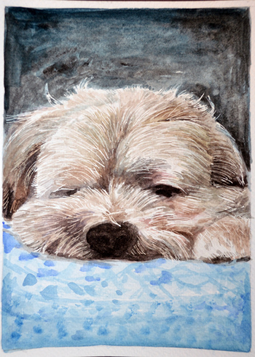 Sleepy pet portrait!
