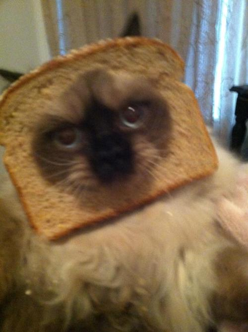 Dis is mai bread head.   Find me on Instagram! Lola_the_beautycat