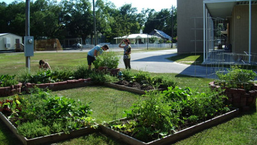 School gardening programs plant seeds of healthy eating New research evidences that children are more likely to to try new foods if they grow them and cook them in a school environment.