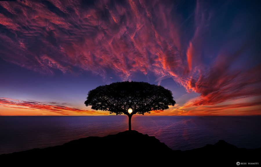 Tree in Sunset by Bess Hamiti