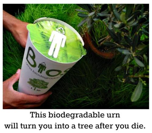 How would you like to grow into a tree after you die?  This is a Bios Urn, a completely biodegradable urn that contains a single tree seed. When planted, the tree seed is nourished by and absorbs the nutrients from the ashes. The urn itself is made from coconut shell and contains compacted peat and cellulose. The ashes are mixed with this, and the seed placed inside. You can even choose which type of tree you'd like to grow! So which would you prefer; leaving behind a tree or a tombstone?