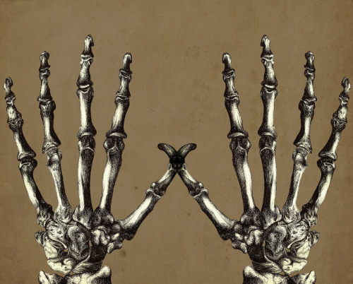 vanessa-draws:  Skeleton Hands. Ballpoint pen, Photoshop. Vanessa Brown.