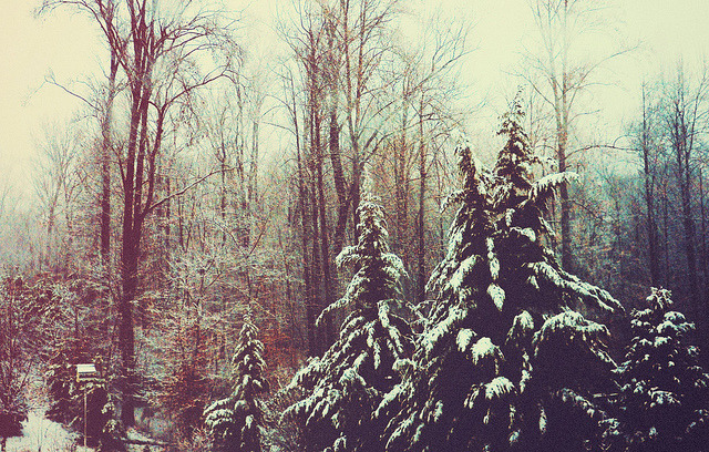 w1ncent:  Coldest Winter by Ashley Harrigan on Flickr.