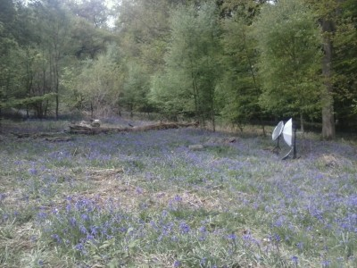 Yesterdays shoot was in the bluebells. It was a lovely sunny day.
