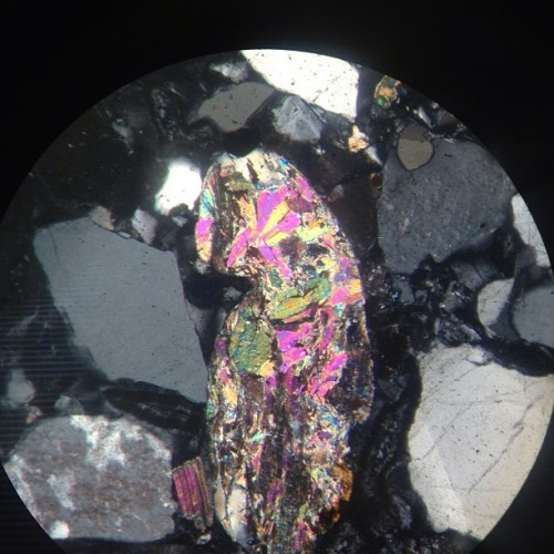 Found this weirdo muscovite grain in a thin section of the Dawson Formation when we were playing around with sedimentary petrology slides instead of studying for lab final… (at Benson Earth Sciences - UCB)