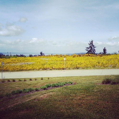 The view at school… So nice… (at Pierce College - Rainier Bldg)