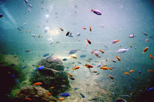 fragilles:  Swimming Souls by petals of paula on Flickr.