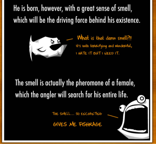 notesonascandal:  mad-as-a-marine-biologist:  The Oatmeal captures perfectly the stories behind what I love about marine life.   Angler Fish MISANDRY!!! LMAOOO!!!