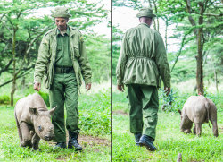 funnywildlife: Campaign: Help Nicky See/Lewa Wildlife Conservancy Wildlife rangers have rescued a blind baby rhino found bumping into trees and rocks on the African savannah. Nicky, a rare black rhino, is now getting 24-hour care at the Lewa Wildlife Conservancy in Kenya and has formed a close bond with staff. The wildlife park has launched a campaign to raise funds for specialist surgeons to restore sight to Nicky's eyes, which have been blinded by cataracts.Picture: Marcus Westberg/Barcroft Media