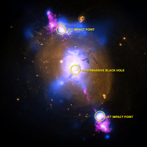 christinetheastrophysicist:  4C+29.30: Black Hole Powered Jets Plow Into Galaxy  This composite image of a galaxy illustrates how the intense gravity of a supermassive black hole can be tapped to generate immense power. The image contains X-ray data from NASA's Chandra X-ray Observatory (blue), optical light obtained with the Hubble Space Telescope (gold) and radio waves from the NSF's Very Large Array (pink). This multi-wavelength view shows 4C+29.30, a galaxy located some 850 million light years from Earth. The radio emission comes from two jets of particles that are speeding at millions of miles per hour away from a supermassive black hole at the center of the galaxy. The estimated mass of the black hole is about 100 million times the mass of our Sun. The ends of the jets show larger areas of radio emission located outside the galaxy. Read More.