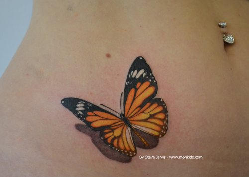 Orange and black butterfly by Steve Jarvis