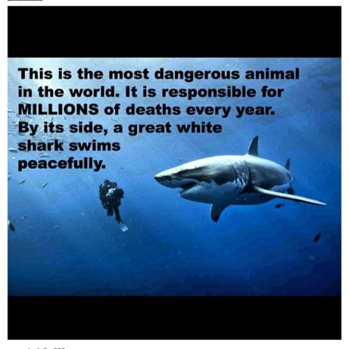 #dangerous #shark #peacefully #what #realtalk #truth #ijs