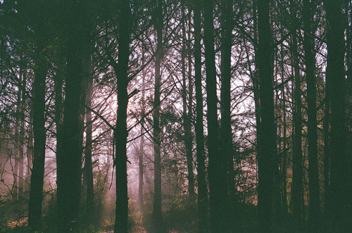 arbres by David Rickless on Flickr.