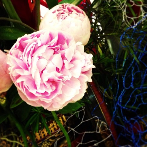 Pretty peonies to get us through Wednesday. GAM-BATZ!