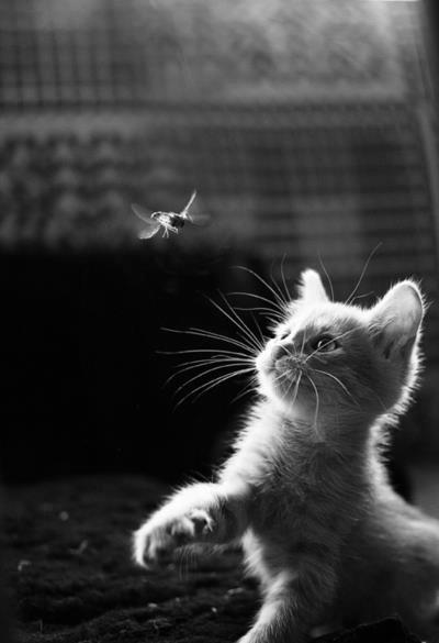 slender-affection:  cat | Tumblr on @weheartit.com - http://whrt.it/Ymm8qu