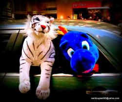 Saw these two hanging out of a car near Times Square.  Only in NYC…