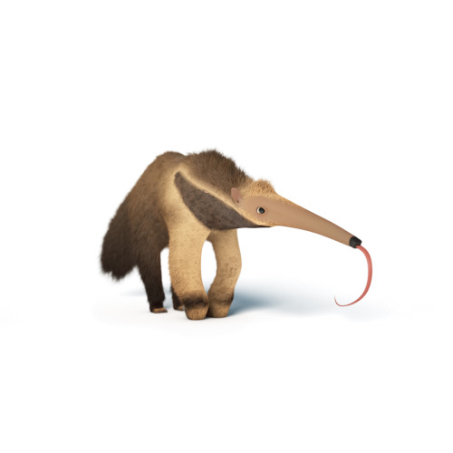 An Anteater! https://www.facebook.com/Flewn