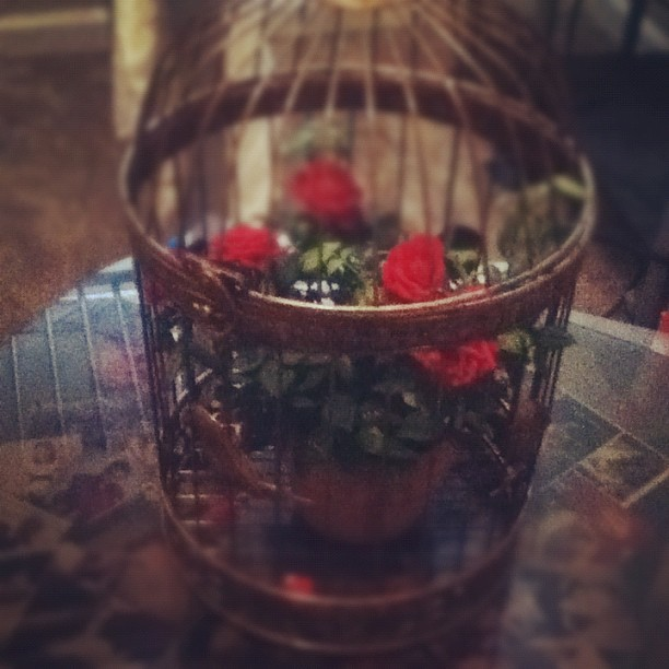 "Got a cute vintage bird cage xD perfect place on my glass table with my collage of family pictures and inside is my ""love fern"" lol"