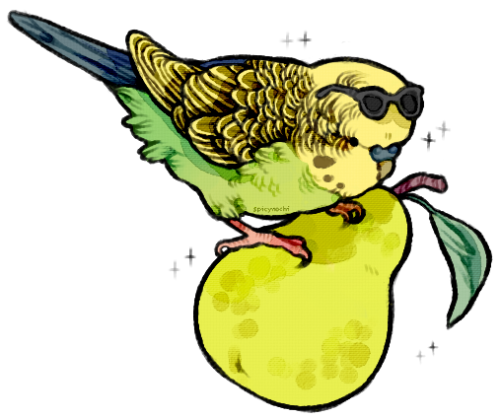 parakeet budgie bird birds digital art my art art illustration drawing artists on tumblr