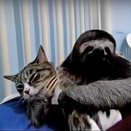 Sloth cuddling with cat via wimp.com