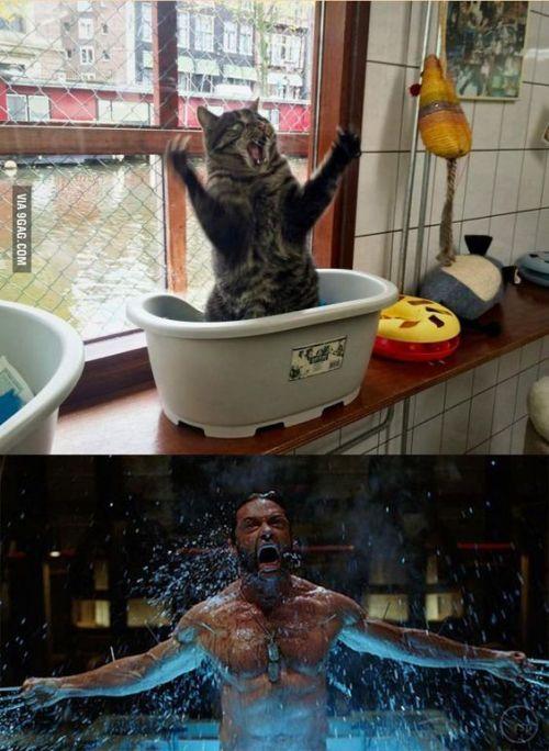 X Men XMen X-Men Battle Power Wolverine X-Masters Beast Logan Cat Gato Gato bañandose