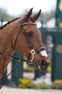 fullalleylove:  Final day at Rolex Kentucky Three-Day Event. (X)