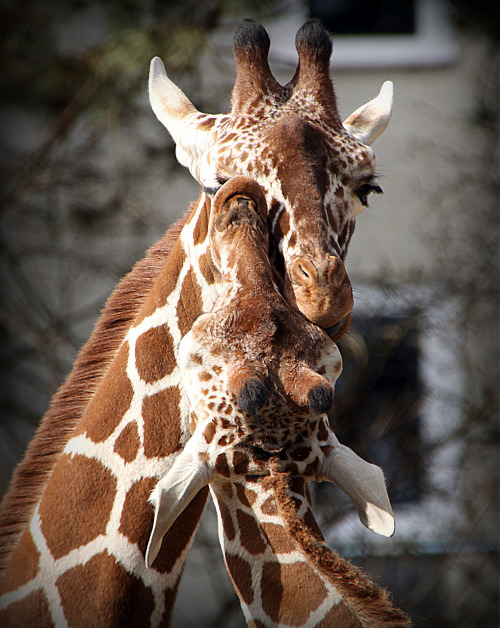 magicalnaturetour:  Tenderness by Alexander Andronik