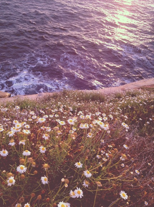 solar-blossoms:  so tranquil