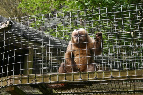 If you've never been, The Monkey Sanctuary in Cornwall is well worth a look. It's no zoo, with only 38 animals on show, but has great enclosures with passionate keepers and is doing a great thing to rescue animals from the pet trade.