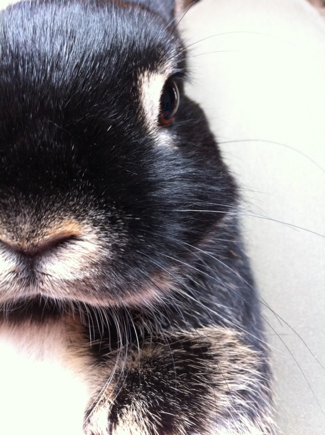 (Bunny's Close-Up Portrait | The Daily Bunnyから)