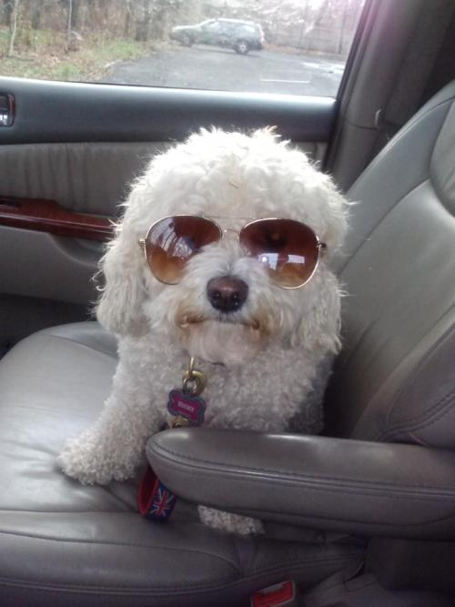 This pup is too cool for school.