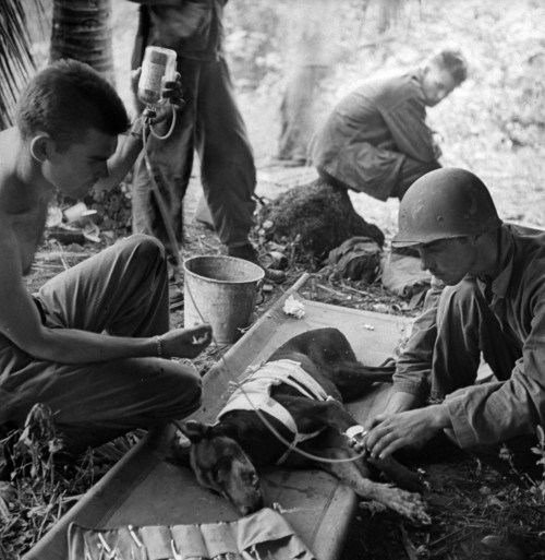 cosmosonic:  American troops treat a wounded dog on Orote Pennisula. W.Eugene Smith. 1944