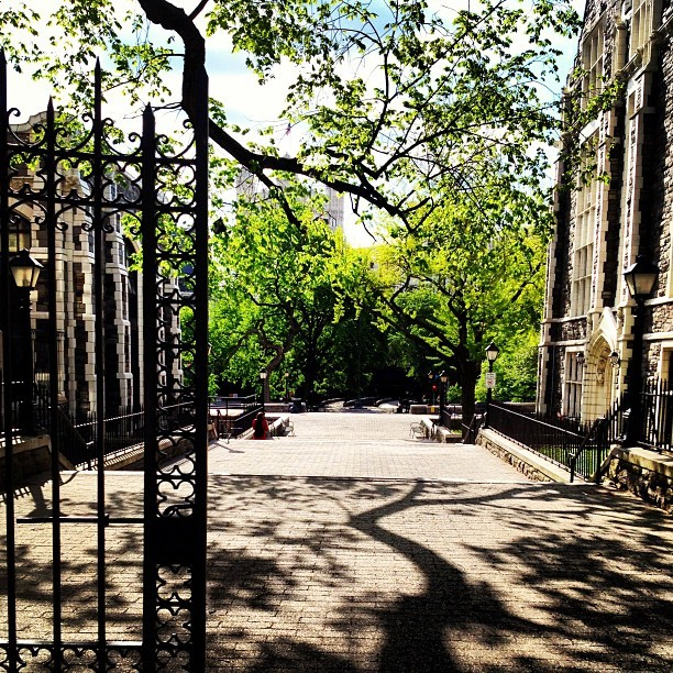 My urban campus is prettier than yours. #ccny #citycollege #nyc #senioritis