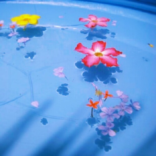 #pool#flowers#petals#blue#blue#yellow#nature#water#shadow#garden#art#design#pretty#cute#style#cute#shoutout#fresh#picture#sunlight#bright#colorful#lif#art#God##Goodafternoon#instagood#instapic#swimming