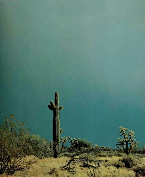 ohlordylordy:     Desert country by Steve Crouch 1976, Crown