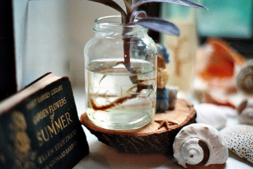 wonderingorbit:  anthropology by elizabeth sarah on Flickr.