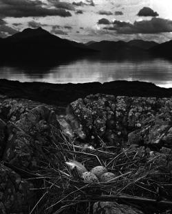 """Gull's Nest, Late On Midsummer Night, Isle Of Skye"", 1947  By: BILL BRANDT…."