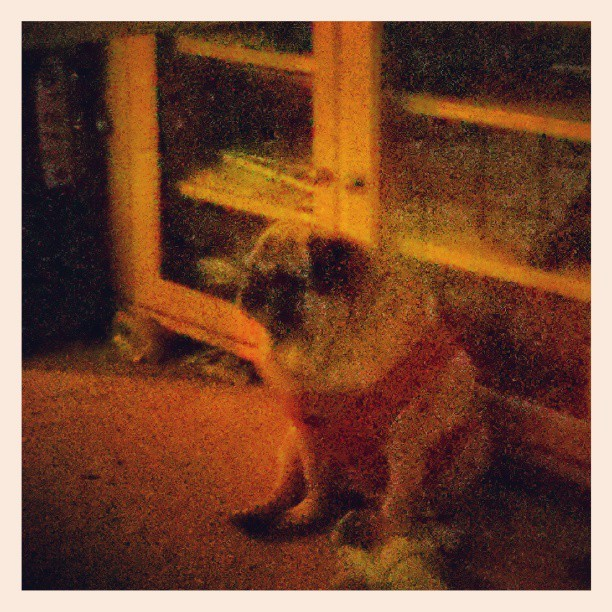 Lilly looks FRESH TO DEATH in her new dress #pug #blurry