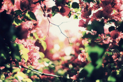 ofundodooceano:  Waiting for spring!!*~* no We Heart It. http://weheartit.com/entry/52355782